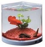 Dophin Acrylic Betta Aquarium Tank