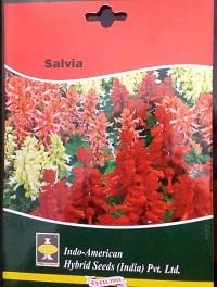 Hybrid Salvia Flower Seeds | buy Imported garden flowers