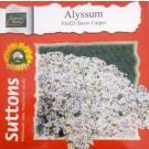 Hybrid Alyssum Flower Seeds