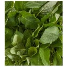 Amaranth Green Leaf Seeds