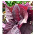Amaranth Red Leaf Seeds