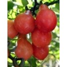 Cherry Tomato Red Pear Seeds