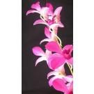 Dendrobium Orchid Plants DMB1038