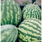 Green Striped Jumbo Watermelon Seeds