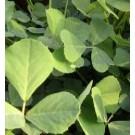 Methi Fenugreek Seeds