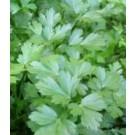 Parsley Plain Leaf Seeds