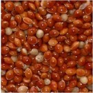 Red Millet cages pets bird seeds
