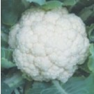 Syngenta CFL1522 Cauliflower Commercial Agriculture Seeds