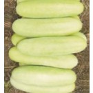 Syngenta Crispy Cucumber Commercial Agriculture Seeds