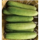 Syngenta Glossy Cucumber Commercial Agriculture Seeds