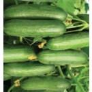 Syngenta Kafka Cucumber Commercial Agriculture Seeds