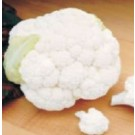 Syngenta Snow Heart Cauliflower Commercial Agriculture Seeds