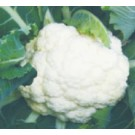 Syngenta Snow Queen Cauliflower Commercial Agriculture Seeds