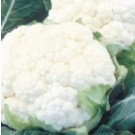 Syngenta Suhasini Cauliflower Commercial Agriculture Seeds