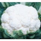 Syngenta Suhasini Plus Cauliflower Commercial Agriculture Seeds